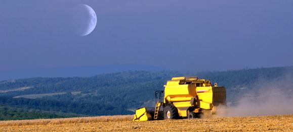 evening-harvest