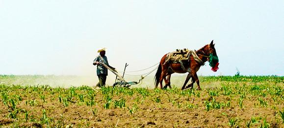 plowing-field