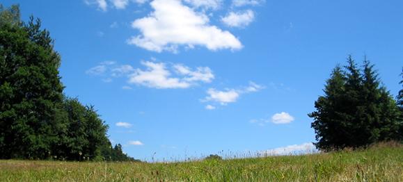 summer-meadow