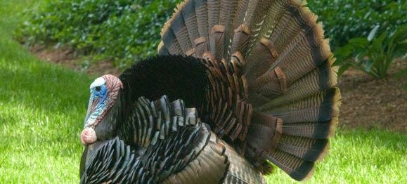 One Turkey Thank-You